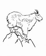 Coloring Goat Mountain Pages Wild Animals Animal Colouring Mountains Drawing Sheets Goats Printable Sheet Honkingdonkey Activity Clip Google Cat Billy sketch template