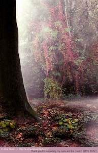 Enchanted Forest Background (60+ images)