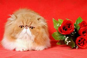 We Make Fun of Valentine's Day Cats in Stock Photos - Catster