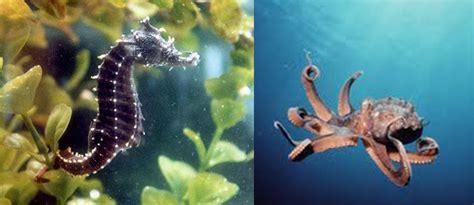 Çfarë dini për oktapodin dhe kalin e detit? - Kafshët