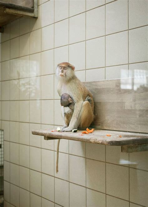 zoo animals most depressing ever