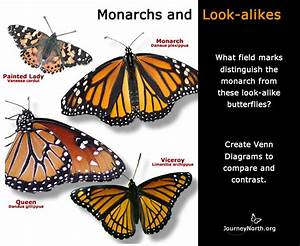 Teacher Guide  Do You Know A Monarch When You See One