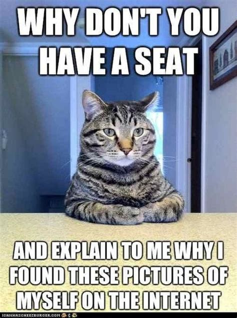 Cat Memes Explain Why I Found My Pics On The Internets