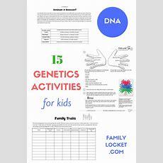 15 Genetics Activities For Kids  Family Locket