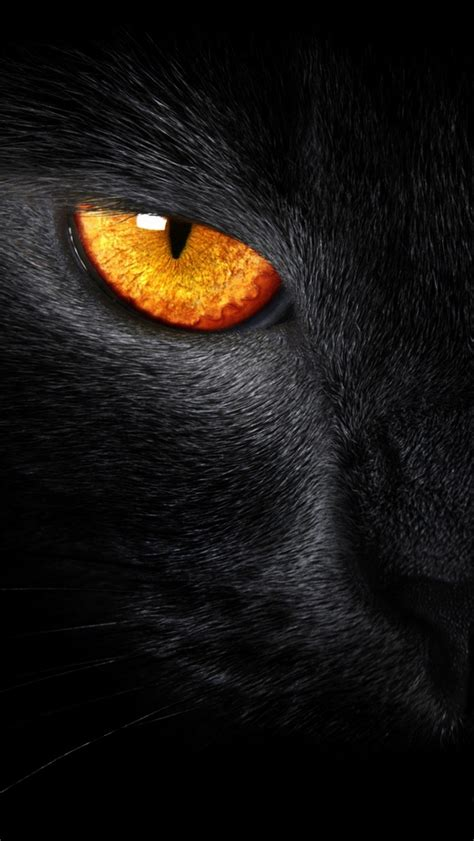Animal Wallpapers For Iphone - 60 animals iphone wallpapers you would to