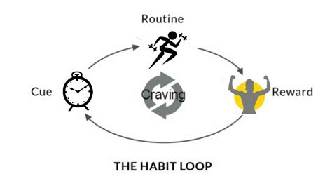 How Habits Are Formed In The Brain by How To Hack Your Brain Into Making Exercise Your Habit