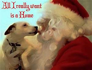 adopting from the shelter bring a dog home for the holidays