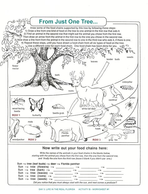 Decomposers Worksheets For Kids  Archbold Biological Station  Ecological Research