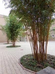 Bambus Im Winter : bambus bambusgras bambusa pflege vermehrung majas pflanzenwelt ~ Frokenaadalensverden.com Haus und Dekorationen