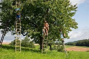 Kirschbaum Kaufen 3m : jetzt ist kirschenzeit hochstamm blog neuigkeiten von hochstamm suisse ~ Buech-reservation.com Haus und Dekorationen