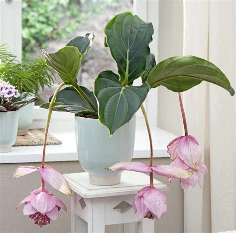 plante pour chambre à coucher quelle plante pour une chambre a coucher atlub com