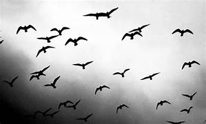 Black And White Images Of Birds 15 Free Hd Wallpaper ...