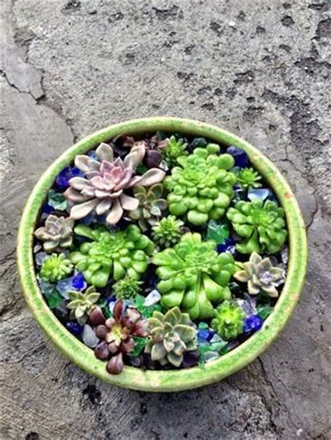 succulent dish garden succulent dish garden pictures photos and images for