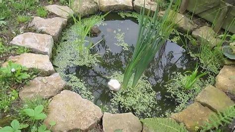 petit bassin de jardin petit bassin de jardin avec petites b 234 tes d eau douce