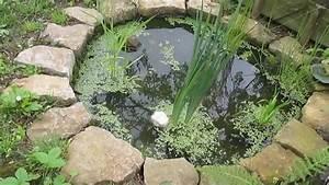 Jardin Avec Bassin : petit bassin de jardin avec petites b tes d 39 eau douce youtube ~ Melissatoandfro.com Idées de Décoration