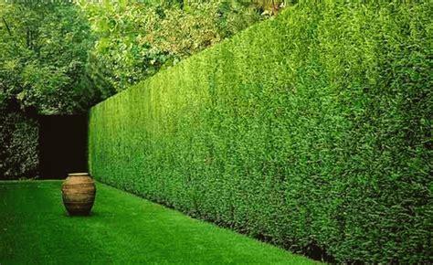 Da realizzare in doppia fila; Siepe giardino: scegli quella giusta per il tuo giardino