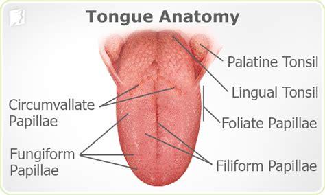 Burning Tongue Symptom Information   34 menopause symptoms.com