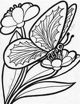 Coloring Butterfly Pages Flowers Butterflies Flower Adults sketch template