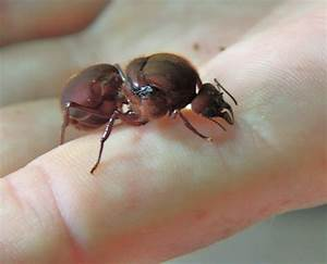 Image Gallery leaf cutter ant queen