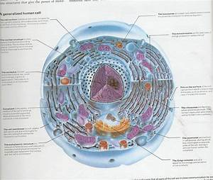 Book Review  Campbell Biology  9th Edition