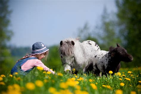 horses miniature pets feeding field child housing spring horse pony meadow pasture requirements smaller than cuddly