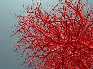 Make Your Blood Vessels Younger To Avoid Heart Attack And