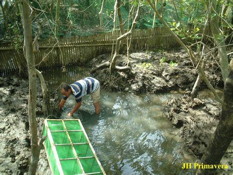 Fish Nursery Net by Mud Crab Seafdec Philippines