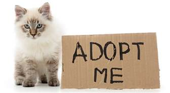 adopt cat adopting cats essential things to