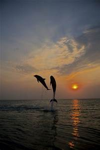 665 best images about Dolphins on Pinterest | Swim, Cancun ...