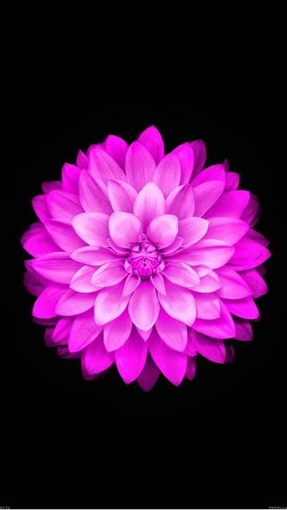 Flower Purple Ios Apple Flowers Iphone Wallpapers