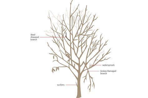 pruning trees march 2015 salmon creek nursery