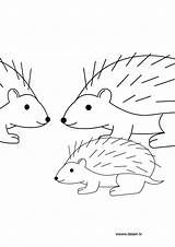 Hedgehog Coloring Pages Nazo Herisson Dessin Coloriage Shadic Animals Silver Results Sonic Template sketch template