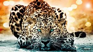 Jaguar Full Documentary - The Year of The Cat - History ...  Jaguar