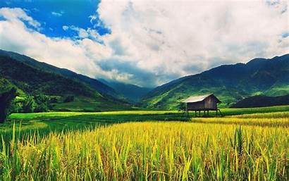 Rice Field Wallpapers Awesome