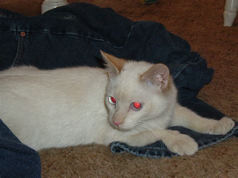 file cat with eye effect jpg wikimedia commons