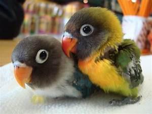 Schöne Bilder Kaufen : papageien 50 unikale fotos zum inspirieren ~ Orissabook.com Haus und Dekorationen