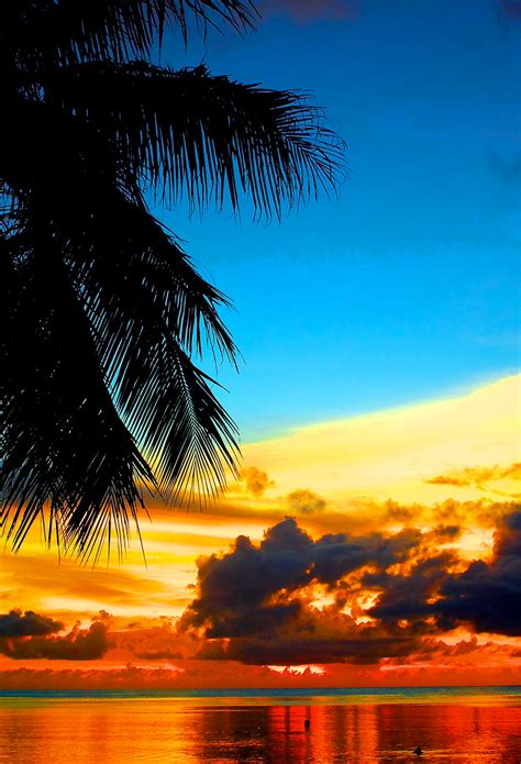 lovely tropical sunset wallpaper  iphone