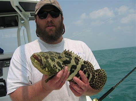 juvenile grouper jewfish goliath bg