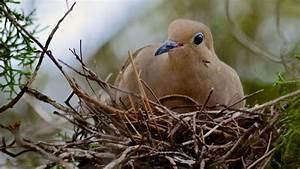 How long do birds incubate their eggs and how long do ...