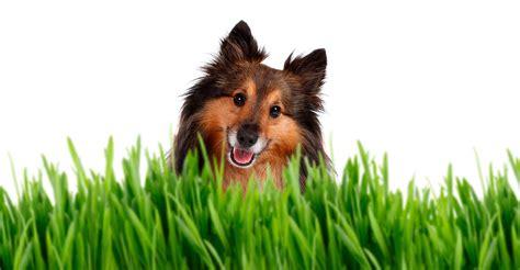 imagenes de perros  compartir increibles agosto