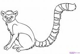 how-to-draw-a-lemur-step-7 jpg  Jungle Drawing With Animals