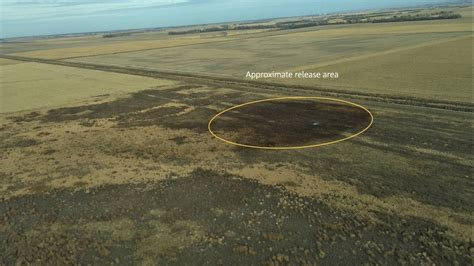Keystone Pipeline Spills 210,000 Gallons of Oil in Amherst ...