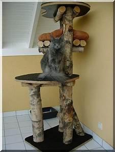 Arbre à Chat Fait Maison : fabriquer un arbre a chat en bois naturel ~ Melissatoandfro.com Idées de Décoration