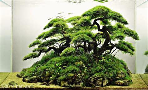 bonsai aquascape 2014 aga aquascaping contest 75