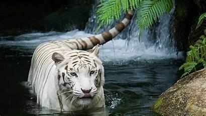 Animal Animals 1080p