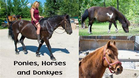 petting horses farm