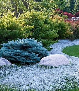 Bodendecker Blau Blühend Winterhart : bodendecker kollektion rot und blau bodendecker stauden ~ Michelbontemps.com Haus und Dekorationen