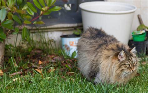 katzen aus garten vertreiben katzen vertreiben diese mittel helfen gegen fremde katzen im garten gartenhaus aufbau