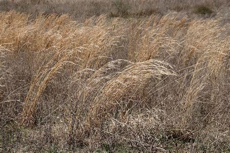 File:Prairie grass.JPG - Wikimedia Commons