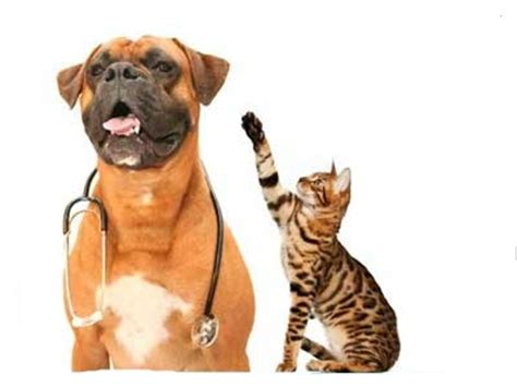 Surgical Issues - Veterinarian Oakville